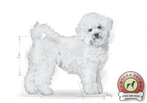 royal canin bichon frise ad 19051-003