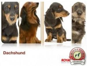 royal canin dachshund ad 18936-004